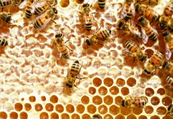 bees-345628_1280